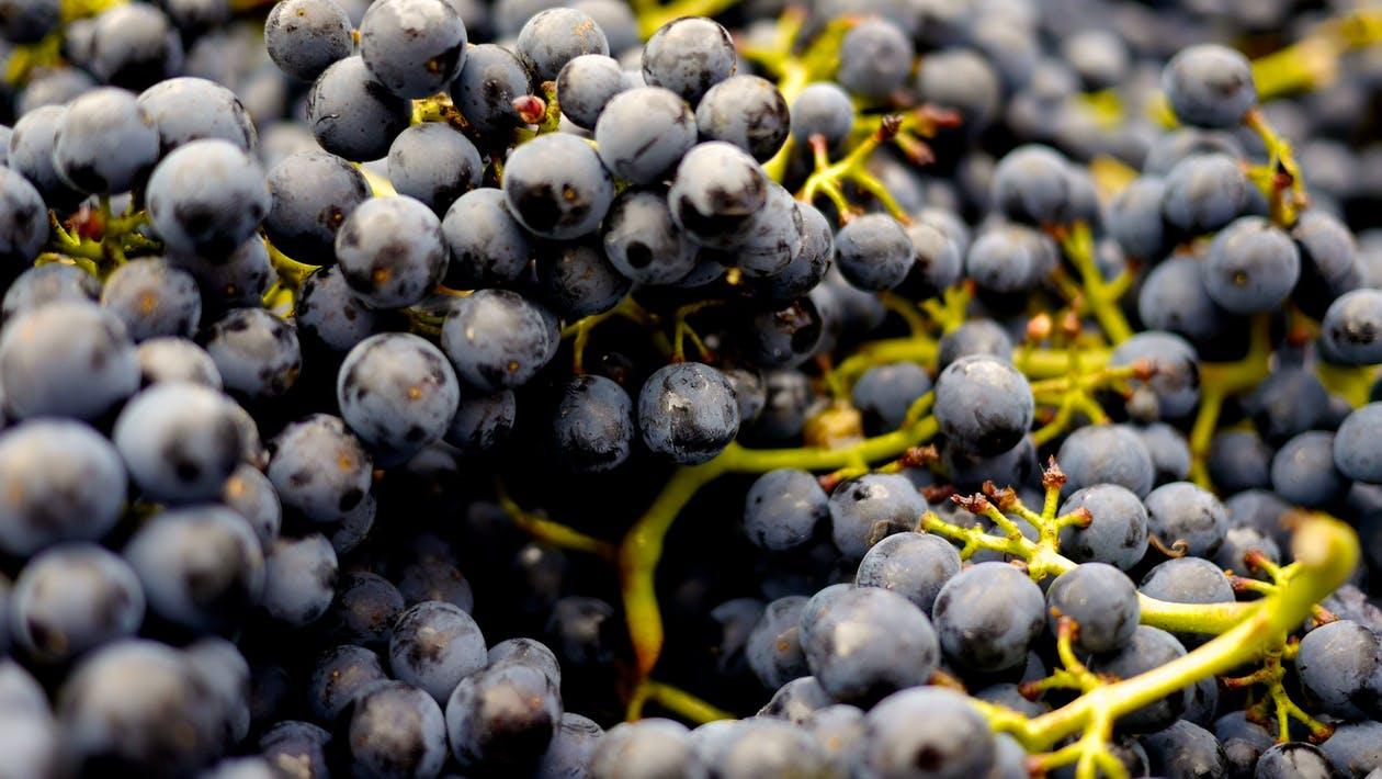 uvas vino racimo