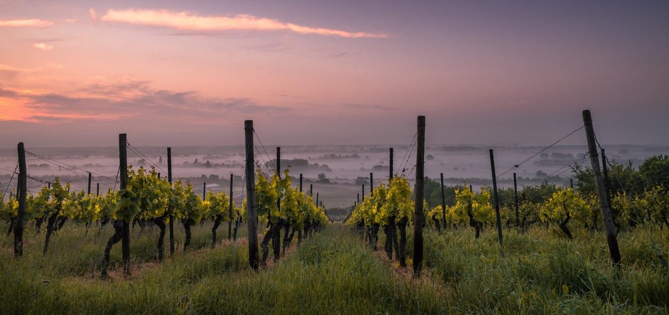 Las mejores bodegas para visitar en La Rioja
