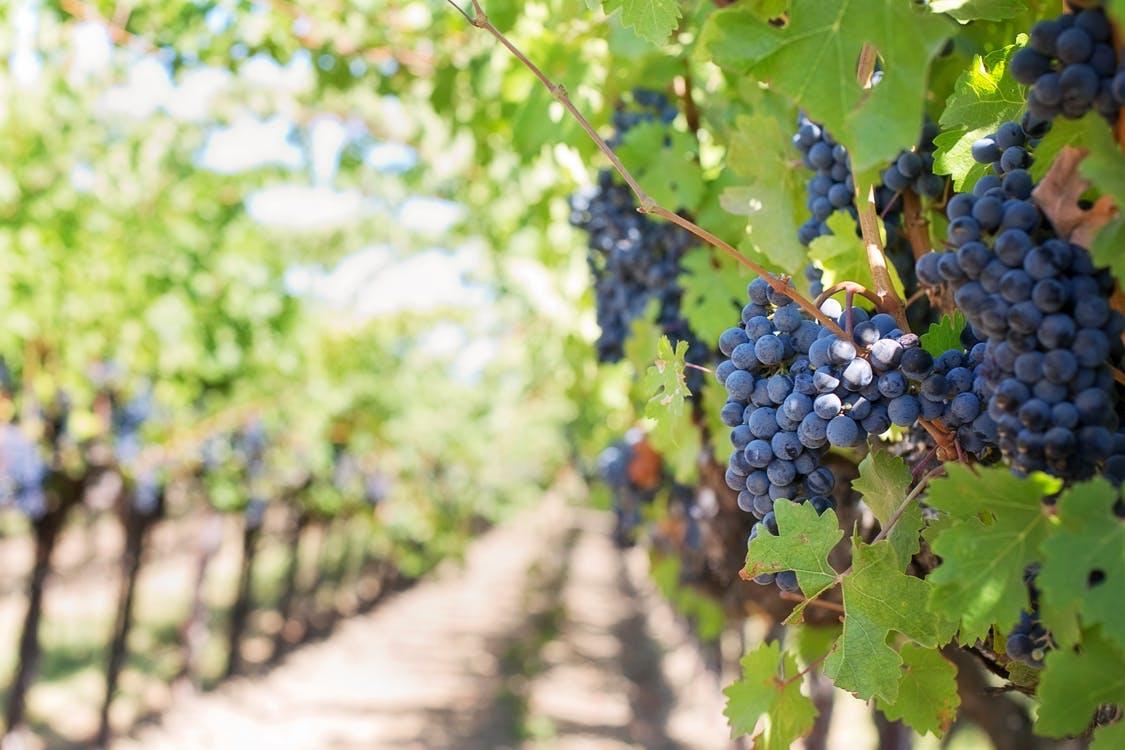 Mapa del vino en España. ¿Cuáles son las Denominaciones de Origen más importantes de España?