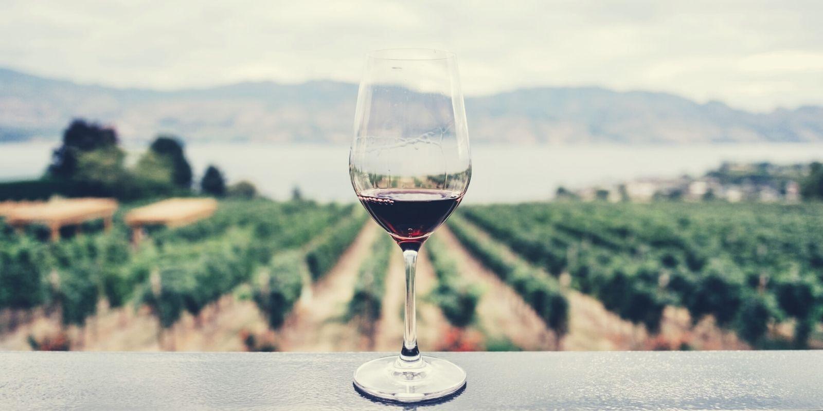 Propiedades y beneficios del vino tinto para la salud