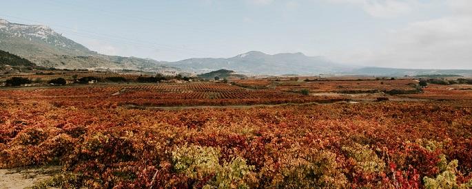 ¿Afecta el cambio climático a la elaboración de vino?