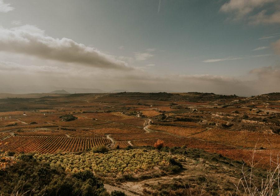 Paisaje viñedos