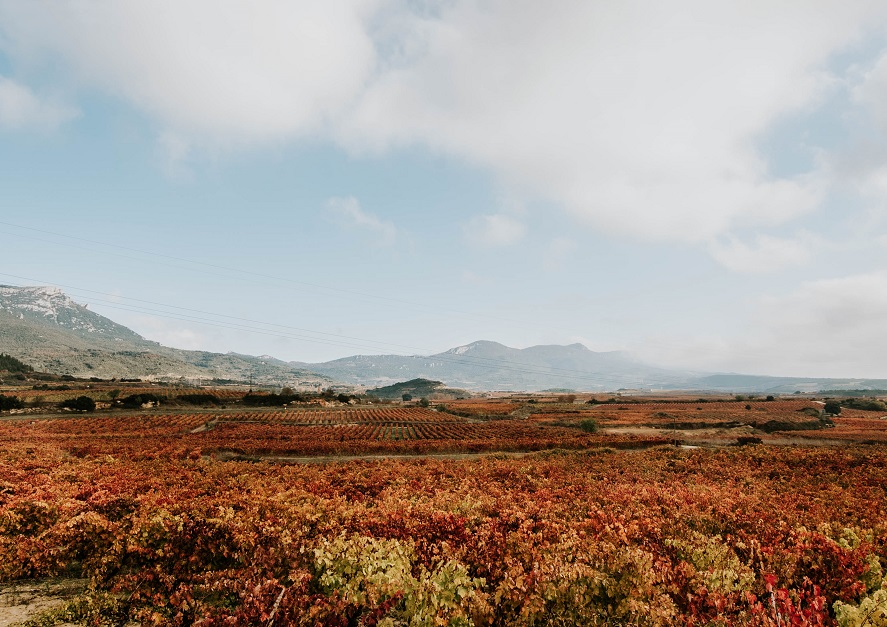 Panorámica viñedo Rioja