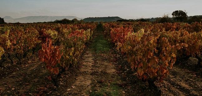 Rioja Alavesa Viñedo