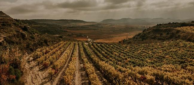Subzonas viñedo Rioja