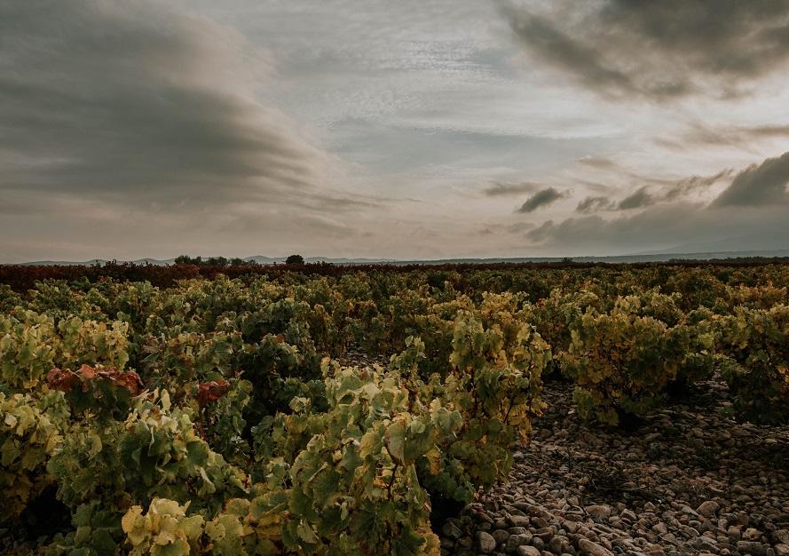 Paisaje viñedo Rioja