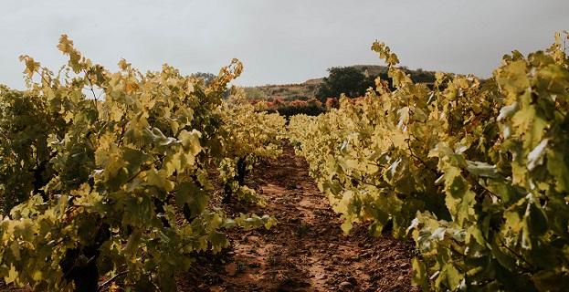 Viñedo Rioja Alta